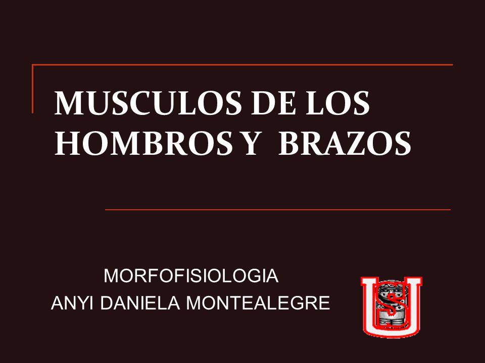MUSCULOS DE LOS HOMBROS Y BRAZOS - ppt video online descargar