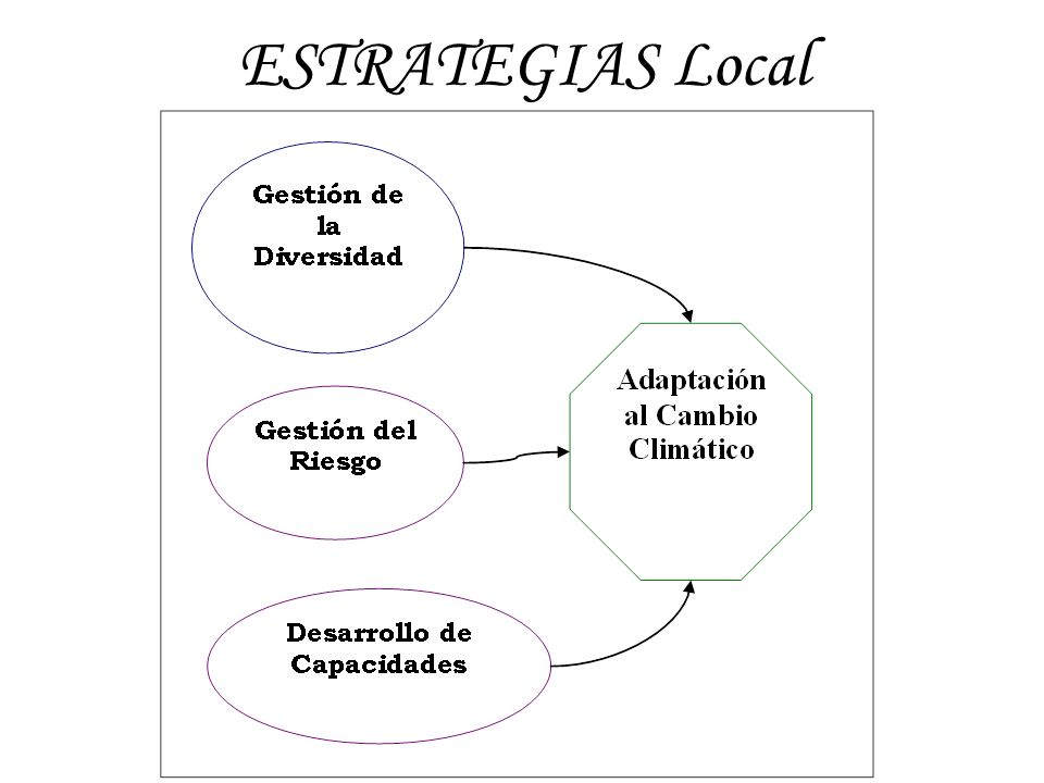 ESTRATEGIAS Local