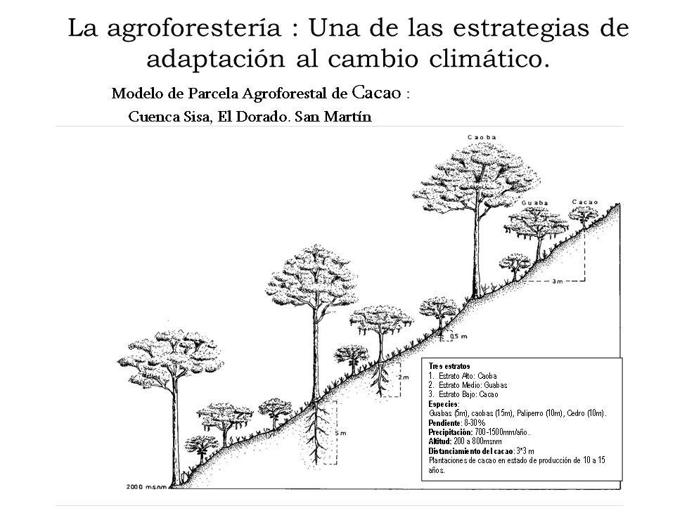 La agroforestería : Una de las estrategias de adaptación al cambio climático.