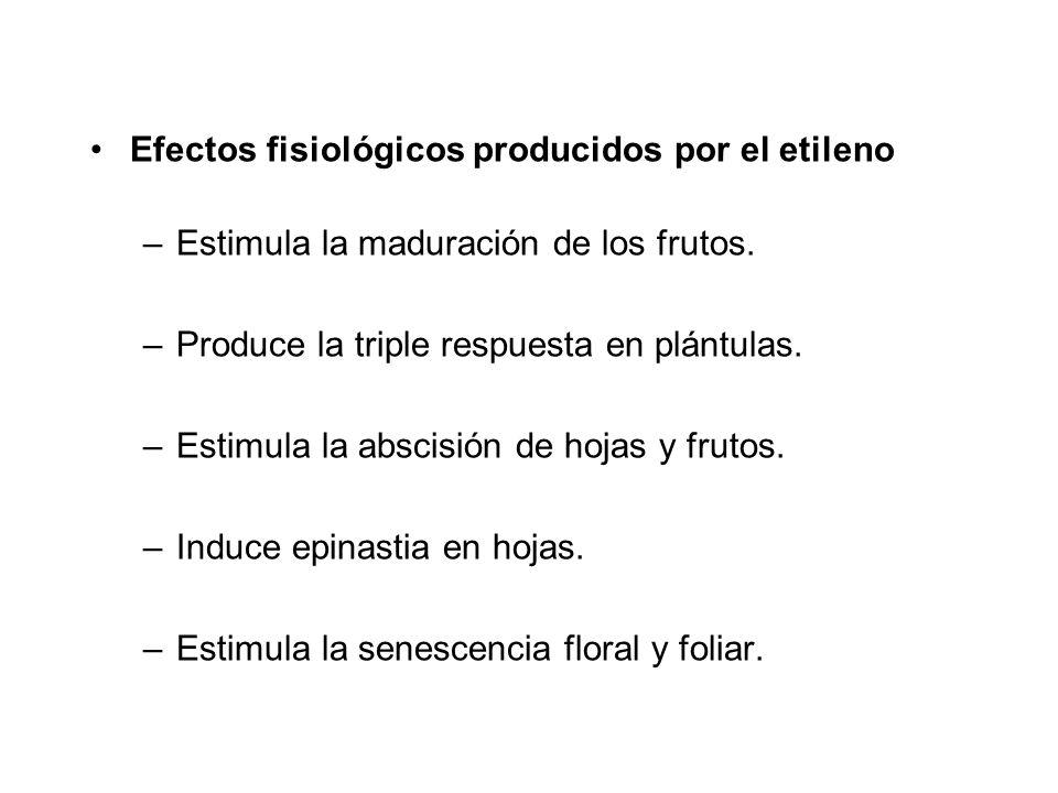 Efectos fisiológicos producidos por el etileno