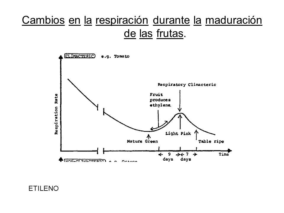 Cambios en la respiración durante la maduración de las frutas.