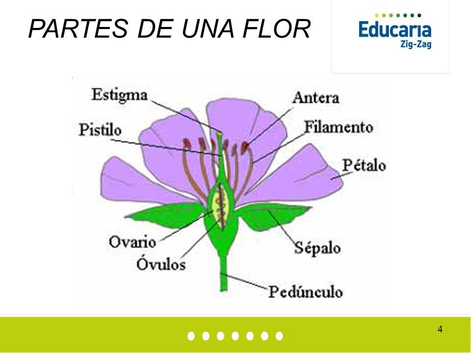 Polinizaci n y germinaci n plantas con flores ppt video for Partes de una griferia de ducha