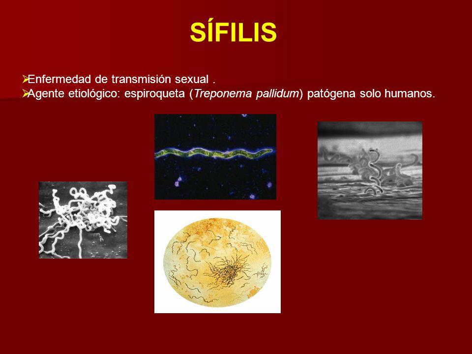 SÍFILIS Enfermedad de transmisión sexual .