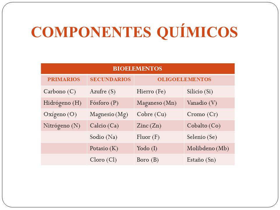 METABOLISMO DE LOS MINERALES - ppt descargar
