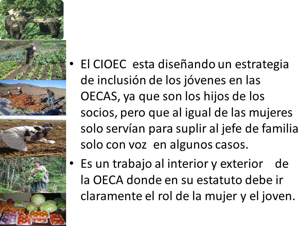 El CIOEC esta diseñando un estrategia de inclusión de los jóvenes en las OECAS, ya que son los hijos de los socios, pero que al igual de las mujeres solo servían para suplir al jefe de familia solo con voz en algunos casos.