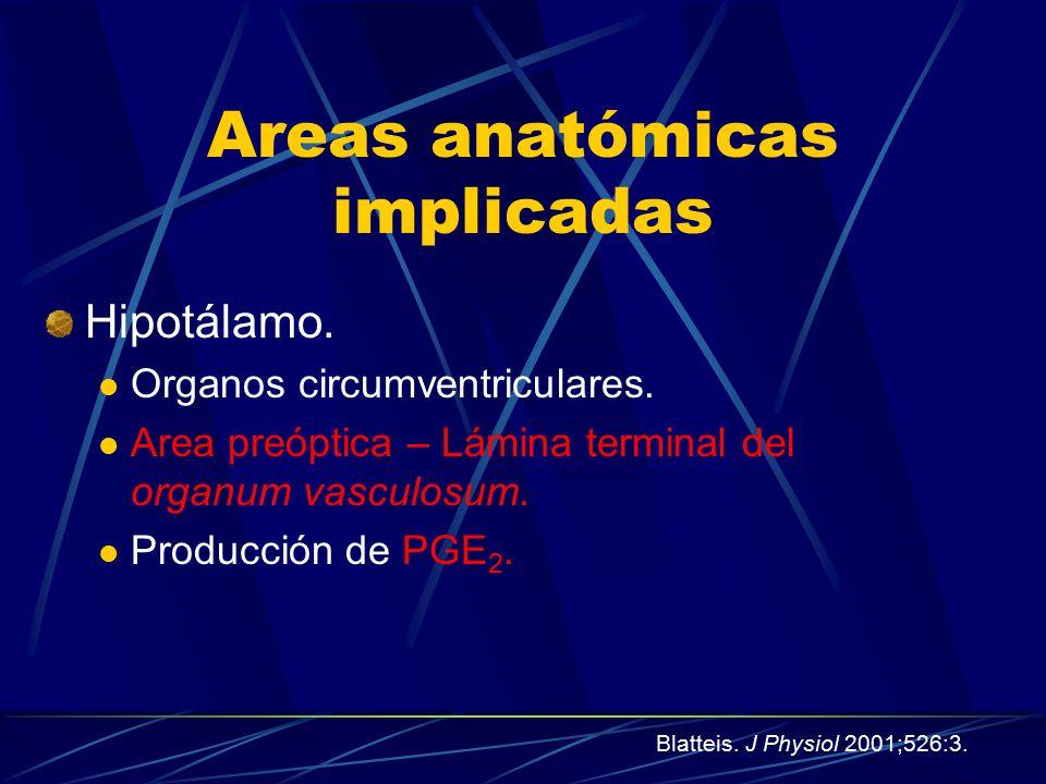 Areas anatómicas implicadas