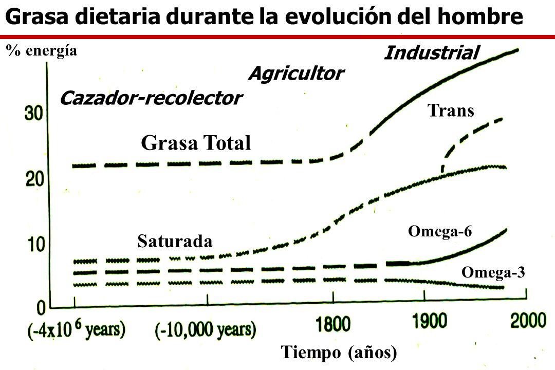 Grasa dietaria durante la evolución del hombre