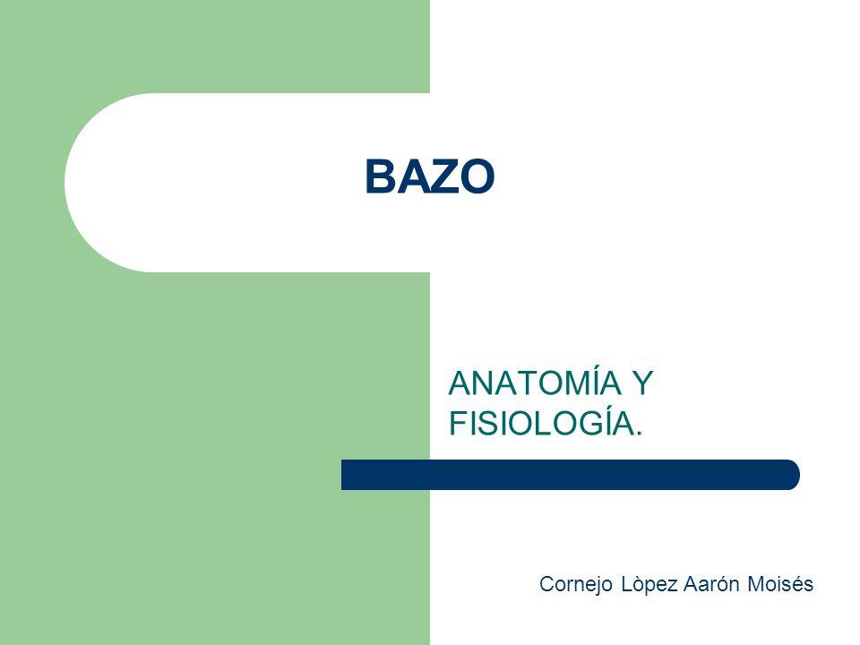 Único Anatomía Bazo Canino Elaboración - Imágenes de Anatomía Humana ...