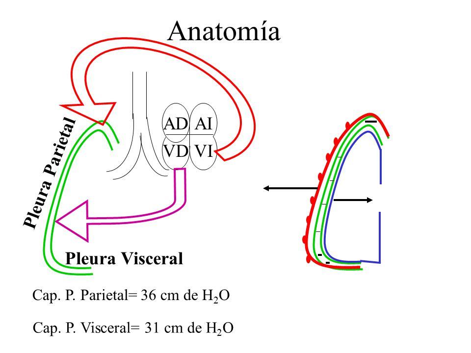 Bonito Visceral En La Anatomía Galería - Anatomía de Las Imágenesdel ...