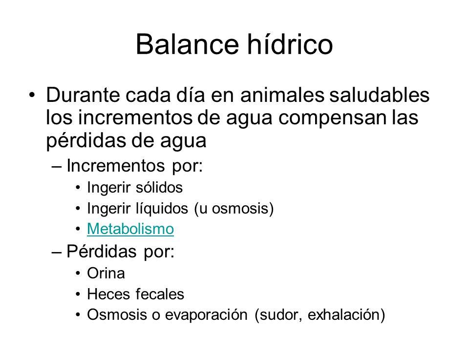 Balance hídrico Durante cada día en animales saludables los incrementos de agua compensan las pérdidas de agua.