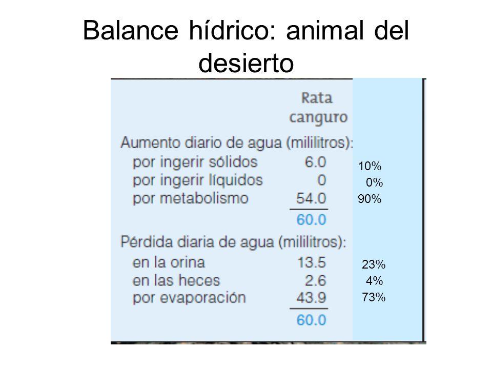 Balance hídrico: animal del desierto