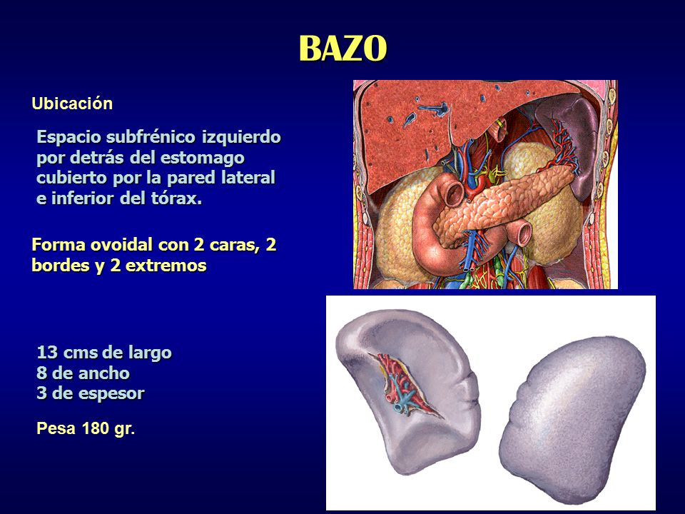 BAZO Ubicación Espacio subfrénico izquierdo por detrás del estomago ...