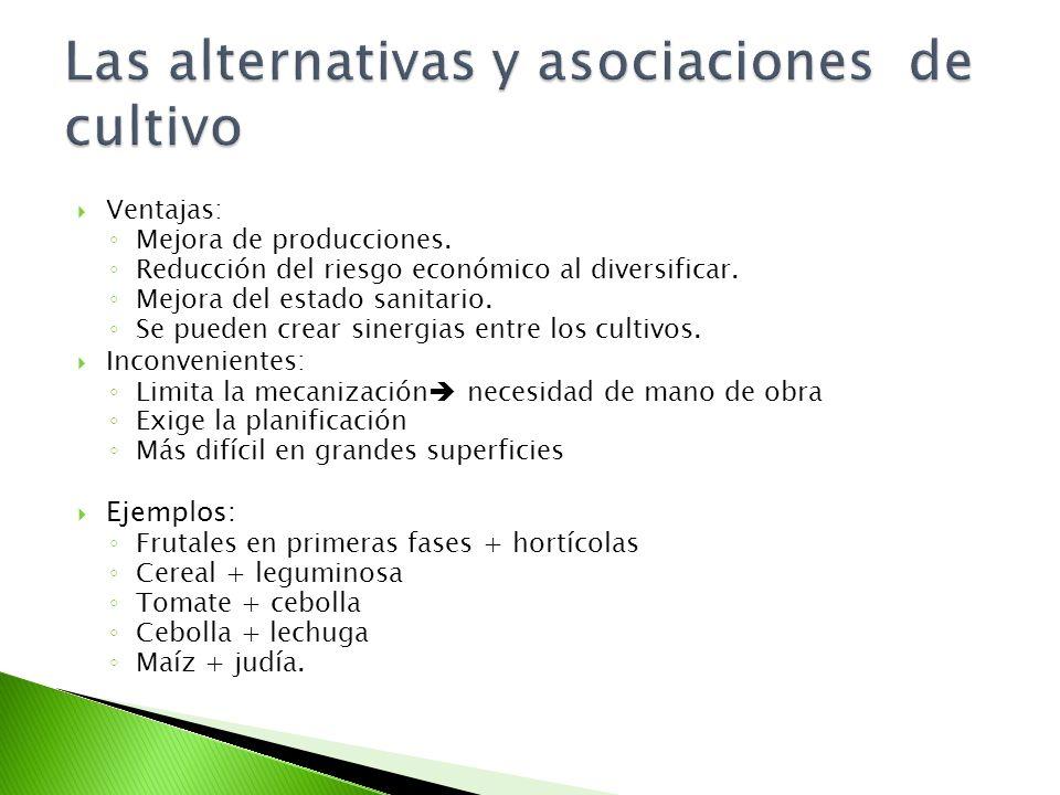 Agricultura ecol gica ppt descargar for Asociacion de cultivos tomate