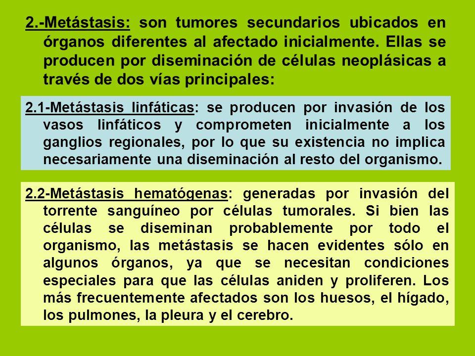 2.-Metástasis: son tumores secundarios ubicados en órganos diferentes al afectado inicialmente. Ellas se producen por diseminación de células neoplásicas a través de dos vías principales: