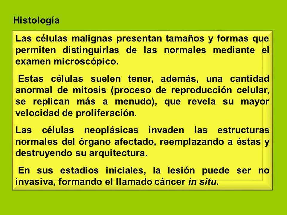 Histología Las células malignas presentan tamaños y formas que permiten distinguirlas de las normales mediante el examen microscópico.