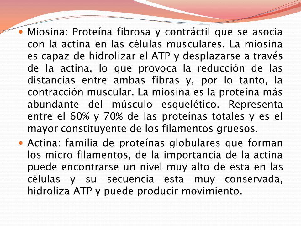 Proteínas Proteínas: Las proteínas son macromoléculas