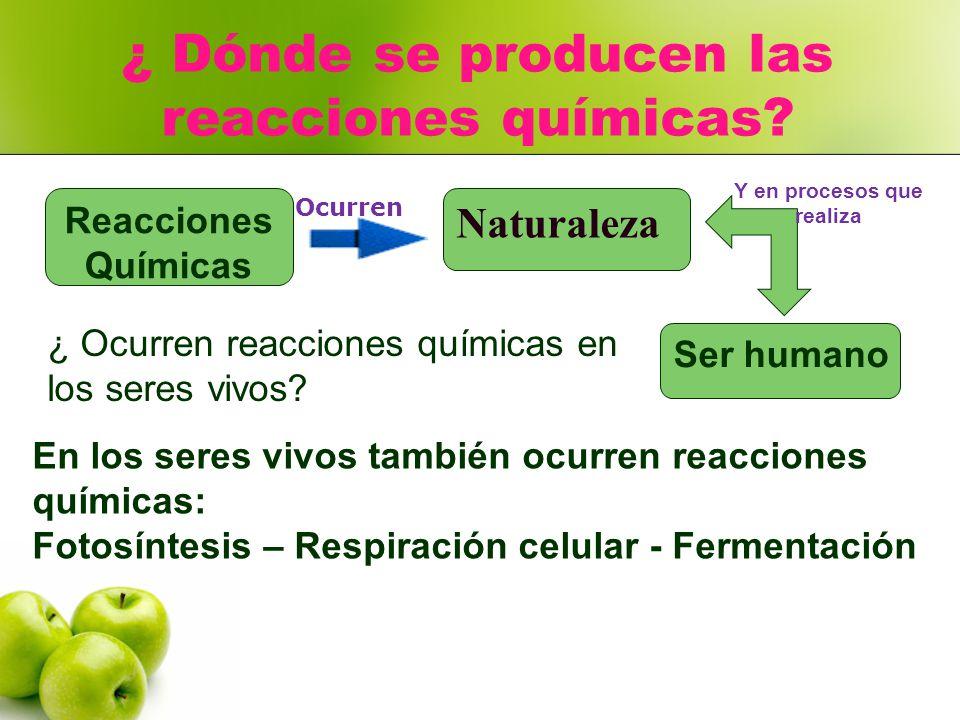 Ecuacion de la fotosintesis y respiracion celular 88