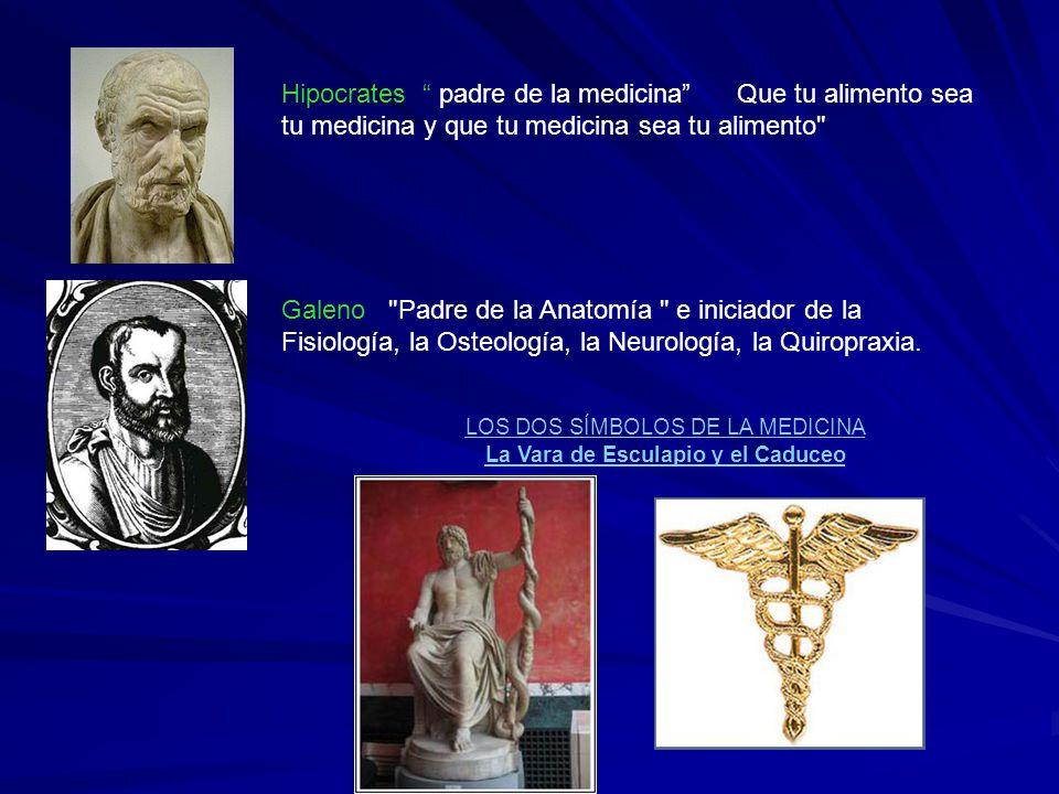 Único Padre De La Anatomía Y La Fisiología Colección de Imágenes ...