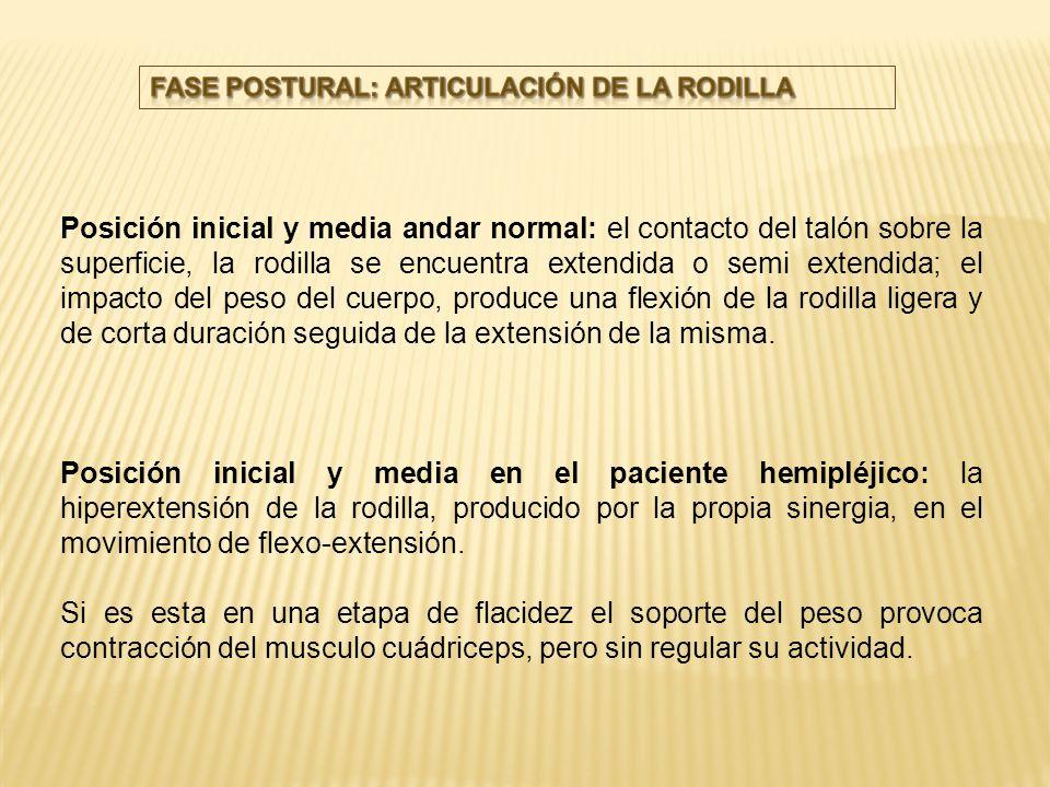 FASE POSTURAL: ARTICULACIÓN DE LA RODILLA