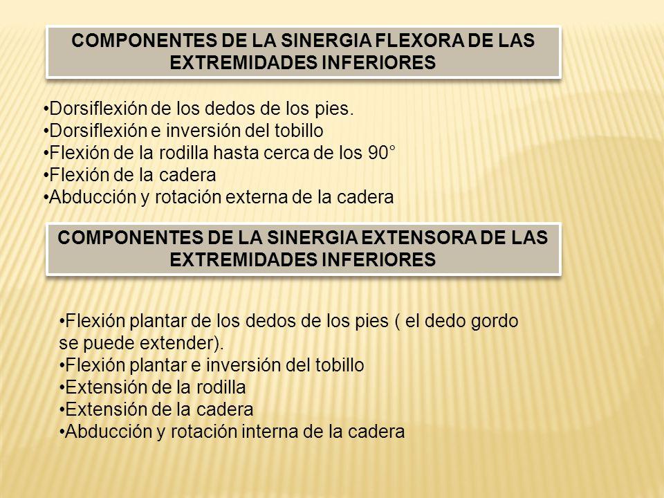 COMPONENTES DE LA SINERGIA FLEXORA DE LAS EXTREMIDADES INFERIORES
