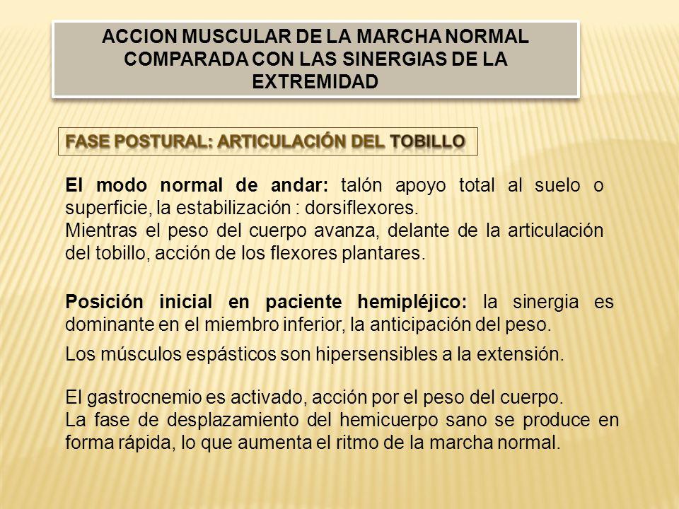 Los músculos espásticos son hipersensibles a la extensión.
