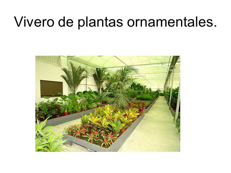 Semilleros y viveros instalaciones y materiales empleados for Viveros ornamentales