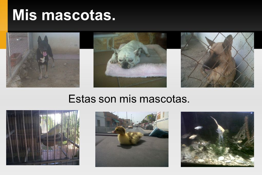 Mis mascotas. Estas son mis mascotas.