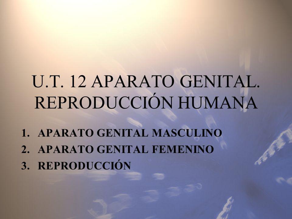 U.T. 12 APARATO GENITAL. REPRODUCCIÓN HUMANA