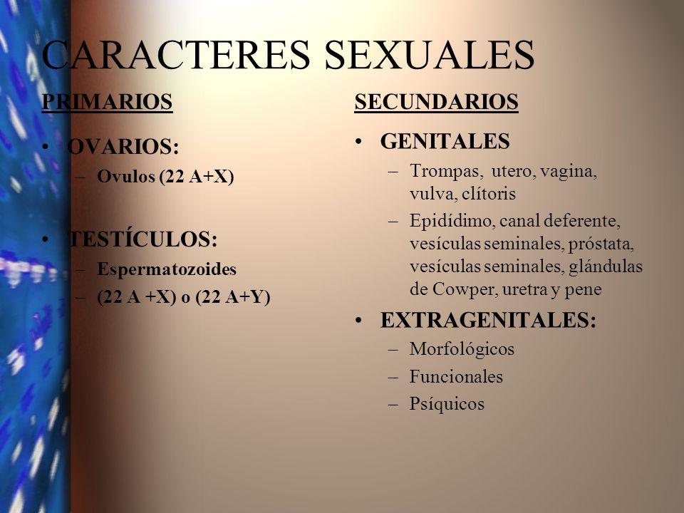 CARACTERES SEXUALES PRIMARIOS SECUNDARIOS GENITALES EXTRAGENITALES:
