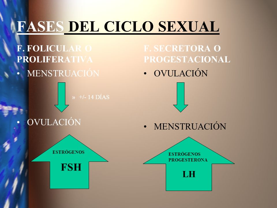 FASES DEL CICLO SEXUAL F. FOLICULAR O PROLIFERATIVA