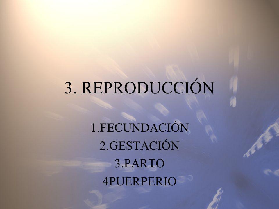 1.FECUNDACIÓN 2.GESTACIÓN 3.PARTO 4PUERPERIO