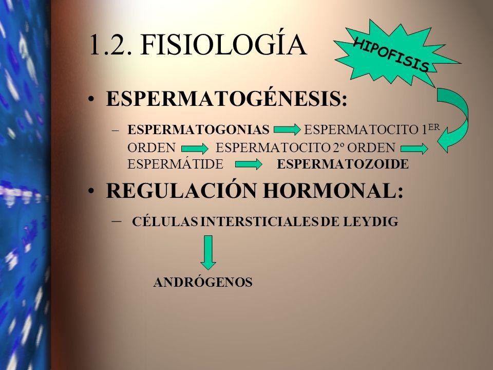 1.2. FISIOLOGÍA ESPERMATOGÉNESIS: REGULACIÓN HORMONAL: