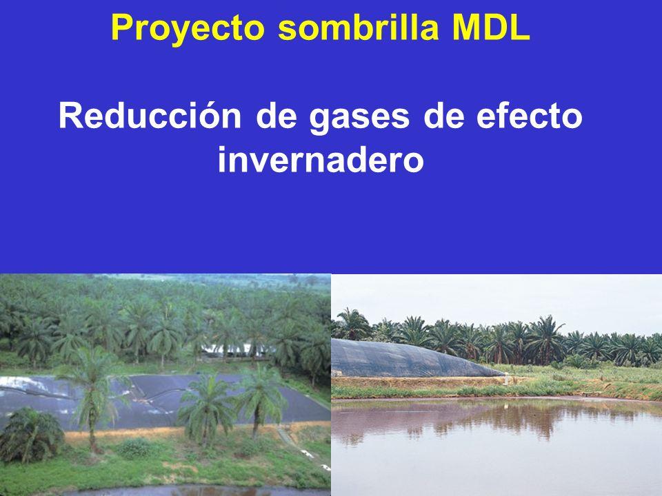 Proyecto sombrilla MDL Reducción de gases de efecto invernadero