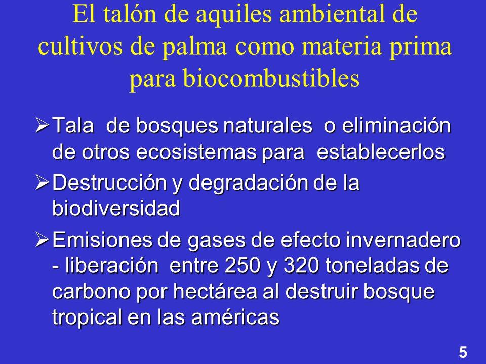 El talón de aquiles ambiental de cultivos de palma como materia prima para biocombustibles
