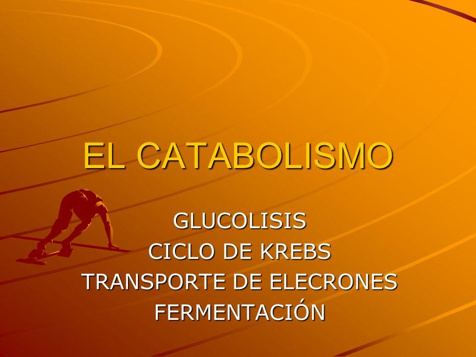 GLUCOLISIS CICLO DE KREBS TRANSPORTE DE ELECRONES FERMENTACIÓN