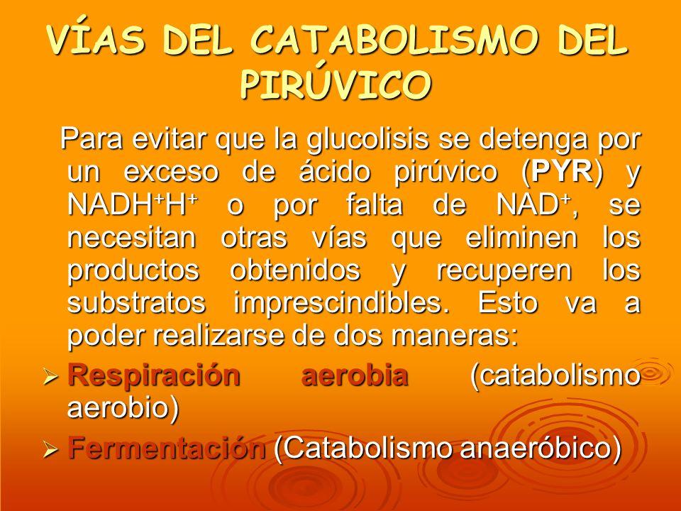 VÍAS DEL CATABOLISMO DEL PIRÚVICO