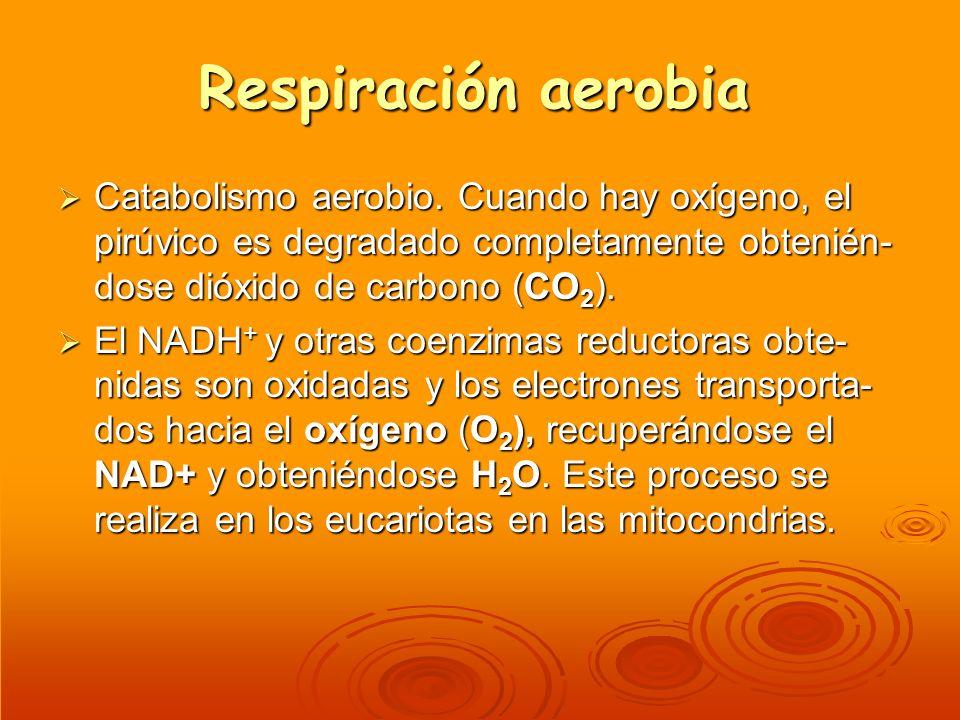 Respiración aerobia Catabolismo aerobio. Cuando hay oxígeno, el pirúvico es degradado completamente obtenién-dose dióxido de carbono (CO2).