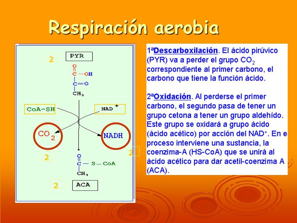 Respiración aerobia 2 2 2 2