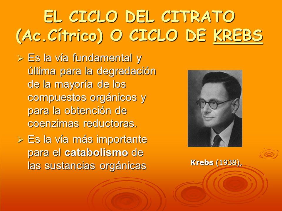 EL CICLO DEL CITRATO (Ac.Cítrico) O CICLO DE KREBS