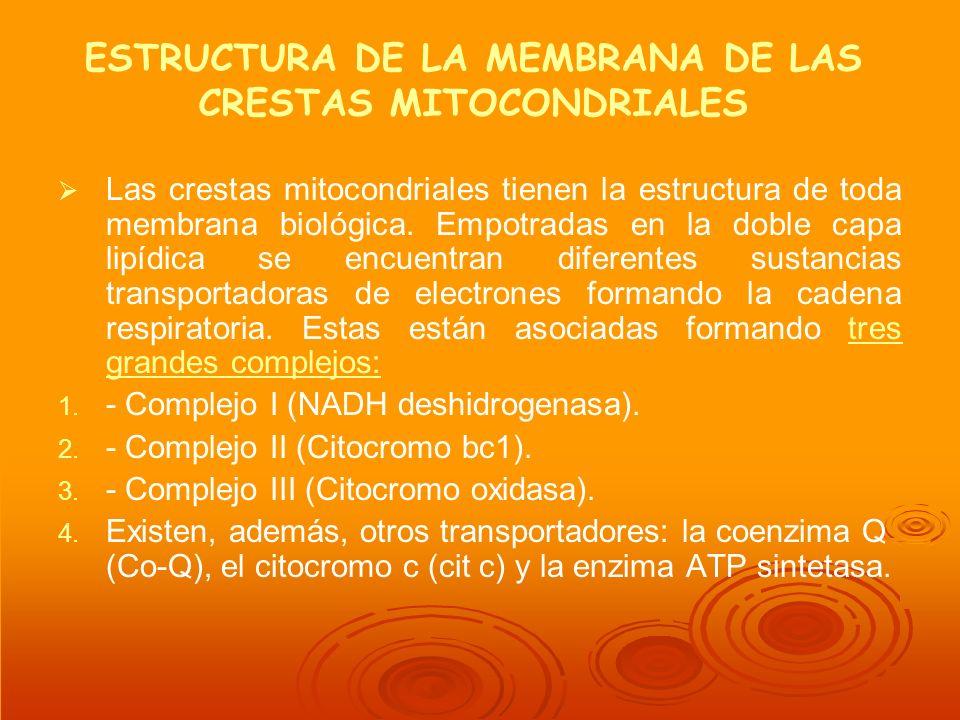 ESTRUCTURA DE LA MEMBRANA DE LAS CRESTAS MITOCONDRIALES
