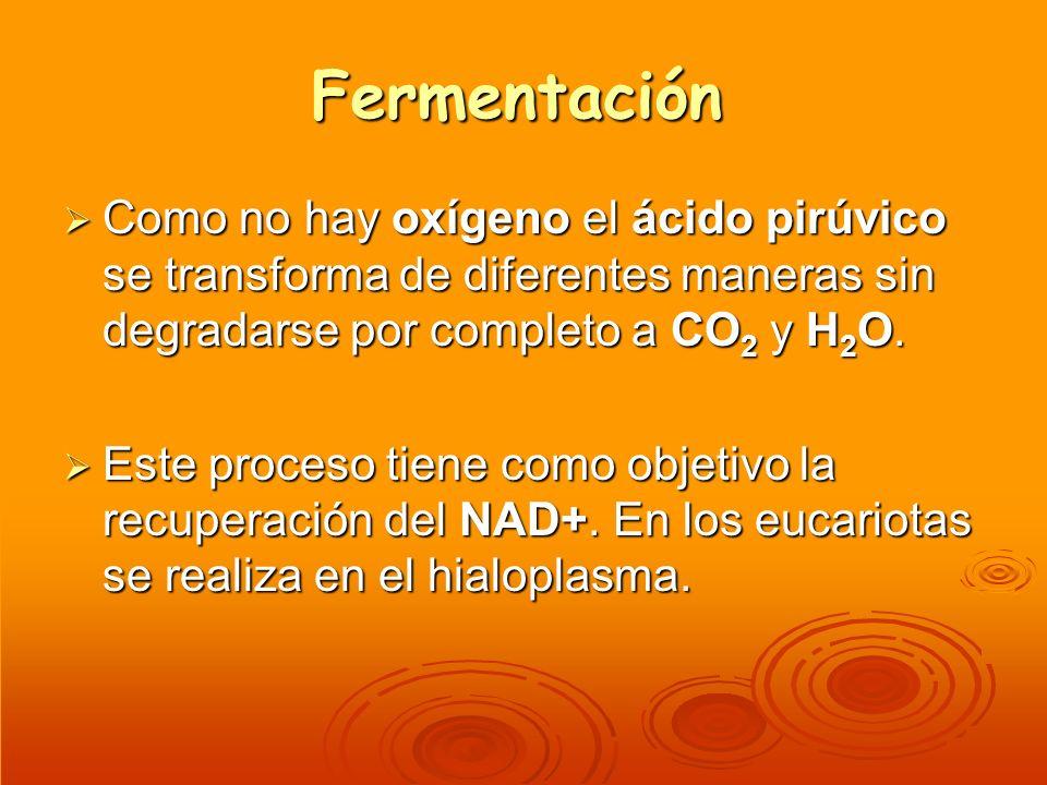 Fermentación Como no hay oxígeno el ácido pirúvico se transforma de diferentes maneras sin degradarse por completo a CO2 y H2O.