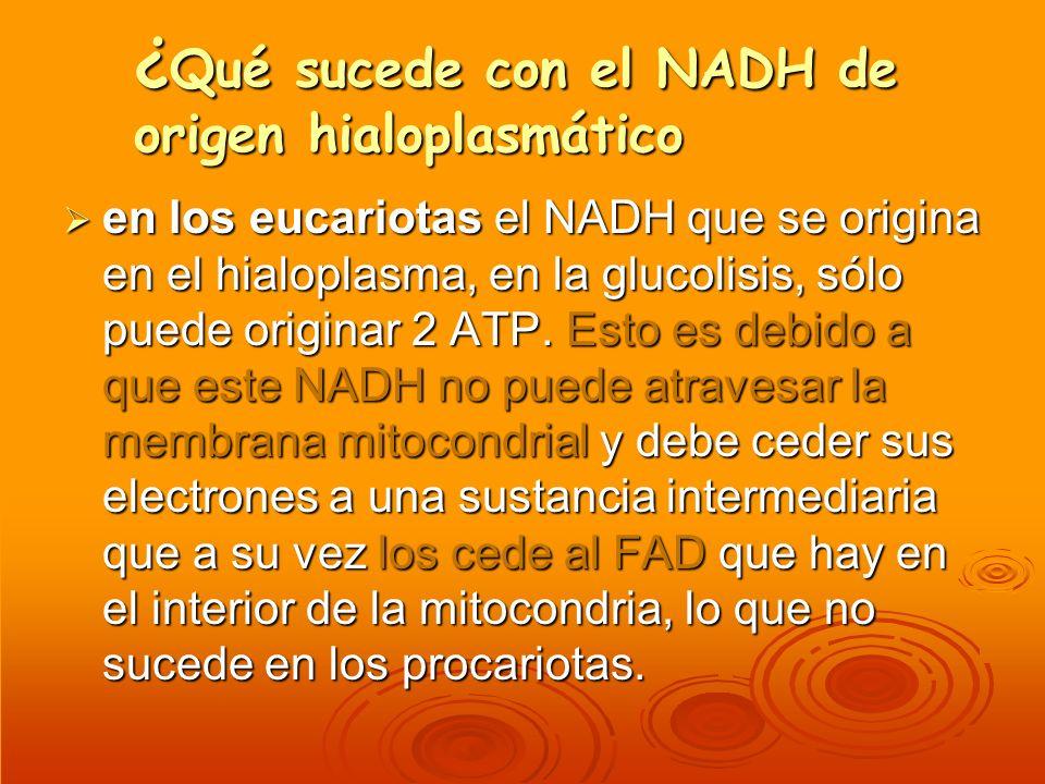 ¿Qué sucede con el NADH de origen hialoplasmático