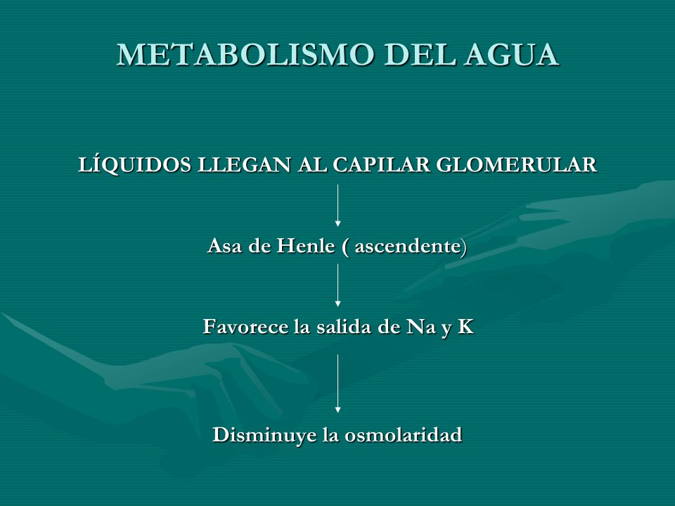 METABOLISMO DEL AGUA LÍQUIDOS LLEGAN AL CAPILAR GLOMERULAR