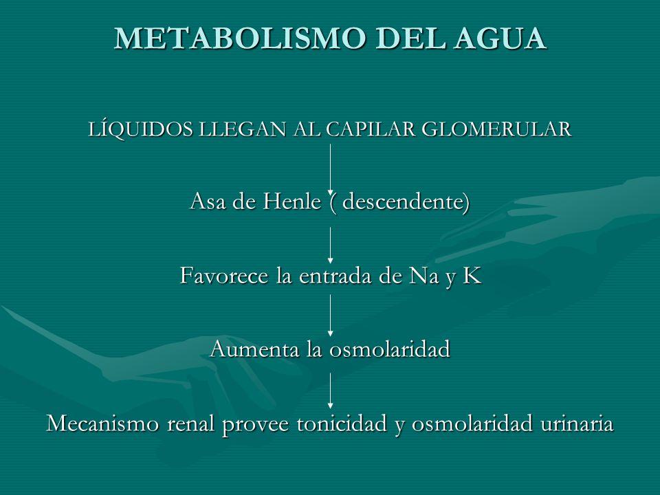 METABOLISMO DEL AGUA Asa de Henle ( descendente)