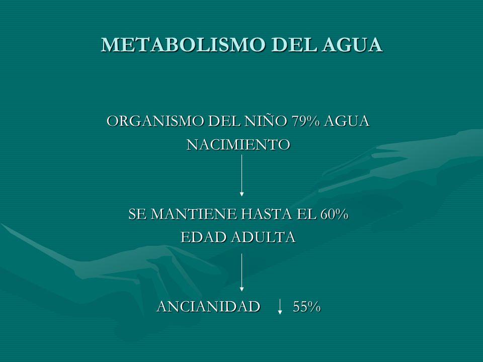 ORGANISMO DEL NIÑO 79% AGUA