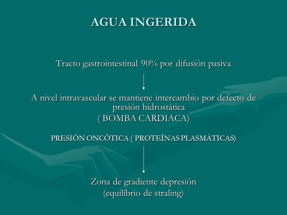 AGUA INGERIDA Tracto gastrointestinal 90% por difusión pasiva