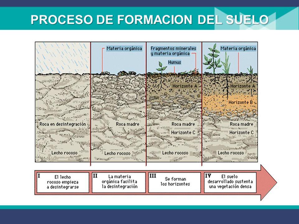 4 secundaria ecolog a biolog a ppt descargar