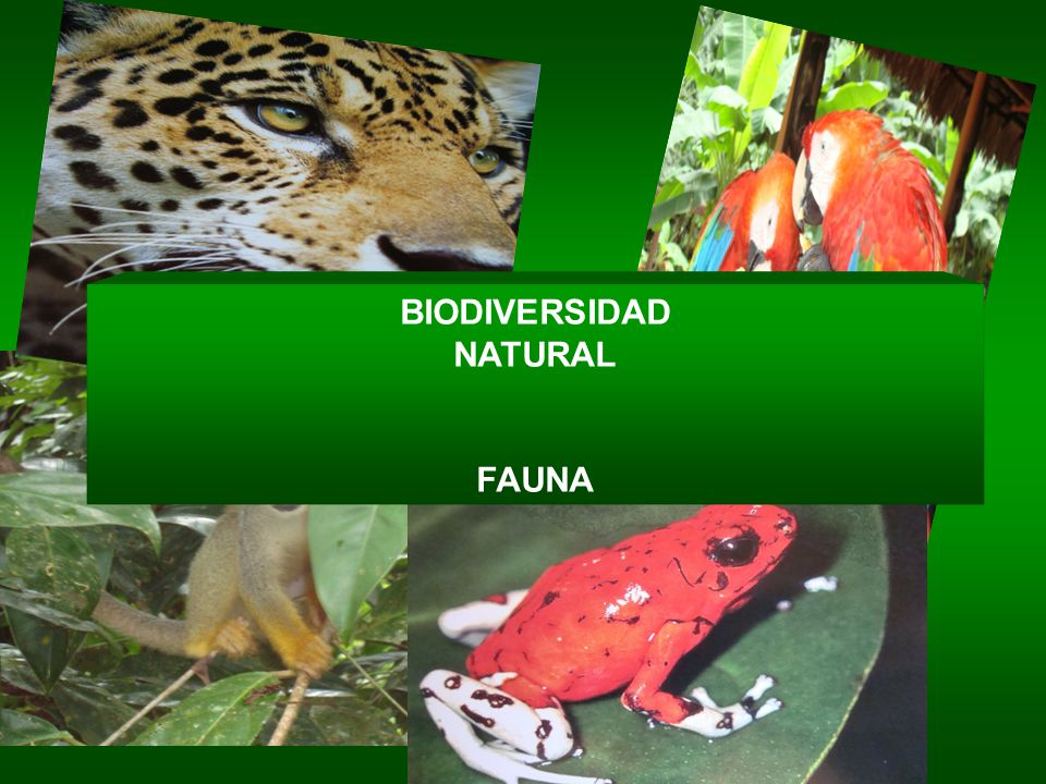 NATURAL FAUNA BIODIVERSIDAD NATURAL FAUNA