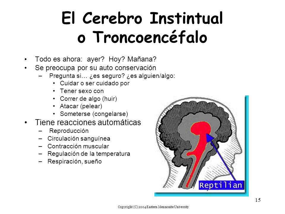 El Cerebro Instintual o Troncoencéfalo