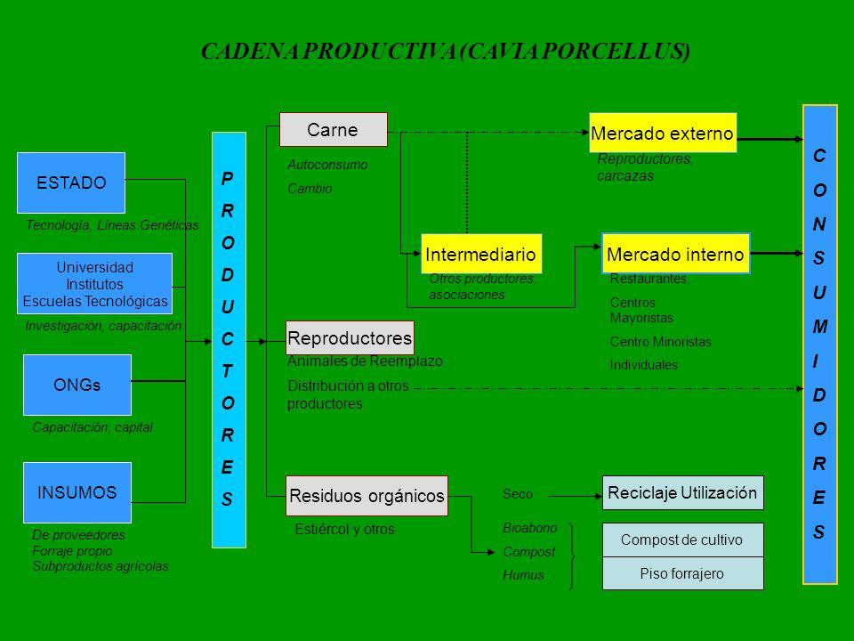 CADENA PRODUCTIVA (CAVIA PORCELLUS)